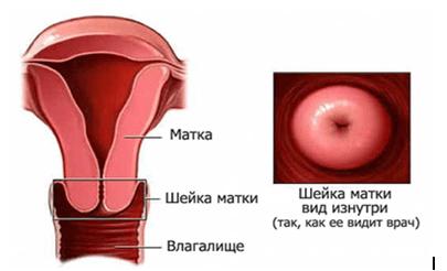 Какая должна быть шейка матки