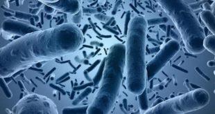 Кишечная палочка в цервикальном канале: как диагностировать и лечить заболевание