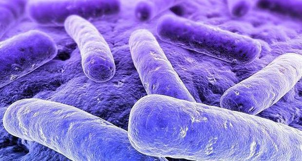 Клебсиелла пневмония в цервикальном канале: как лечиться