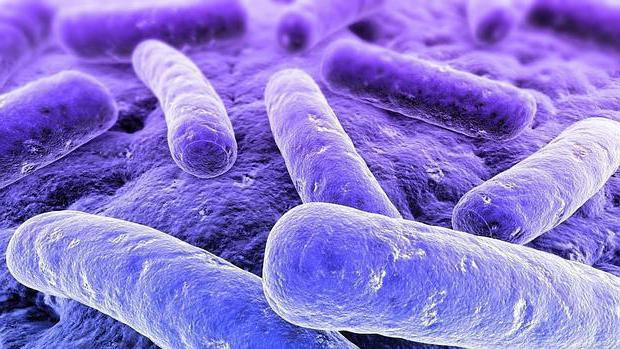 Клебсиелла в моче при беременности и ее влияние на плод » Всё о паразитах человека