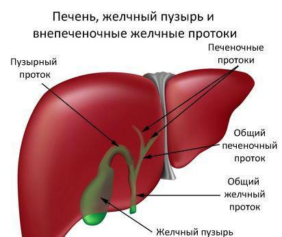 УЗИ гепатобилиарной системы